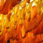 bigstock-Cactus-silk-strands-drying-in--29637416