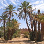 bigstock-Desert-Oasis-With-Palm-Trees--1606891