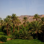 bigstock-Palm-Grove-In-Morocco-4937843