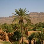 bigstock-Palm-Grove-In-Morocco-4937846