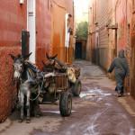 bigstock-Small-Street-In-Marrakech-s-Me-5843228